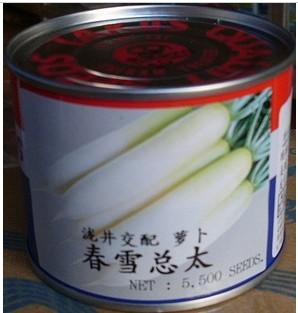 日本萝卜种子 泷井交配春雪总太萝卜种子