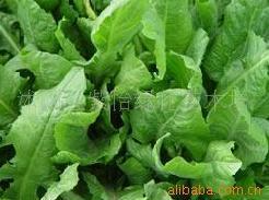 供-优质高产饲料种子-鲁梅