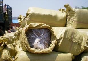 供应塑料袋装玉米秸秆青贮